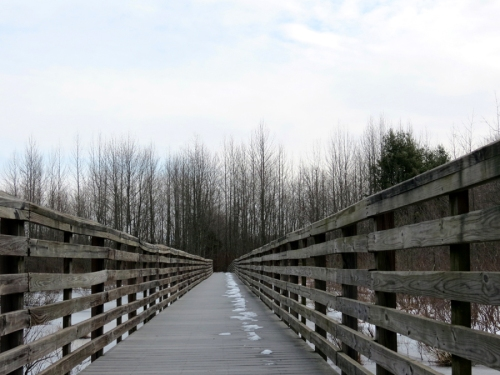 the boardwalk path at the Great Swamp