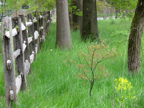 Lots of springtime grass growing by this fence