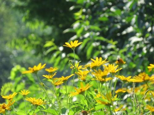 Gwildflowers